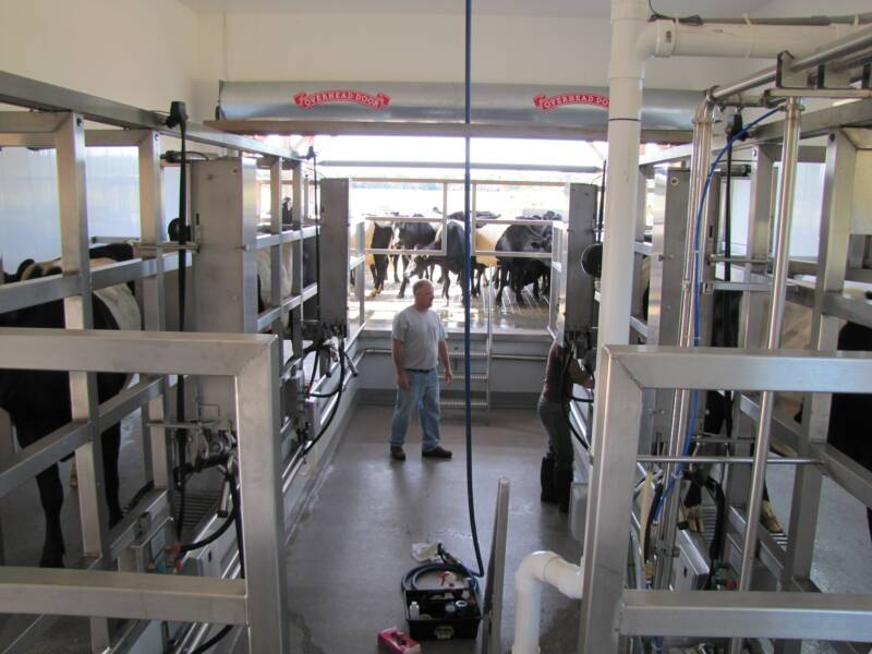 Side Opening Dairy Parlor Auto Tandem Milking Parlor