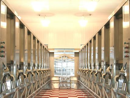 all stainless HerringBone milking parlor
